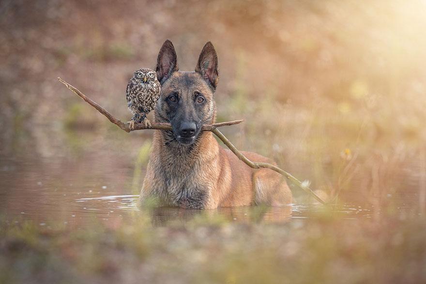 ingo-else-dog-owl-friendship-tanja-brandt-8